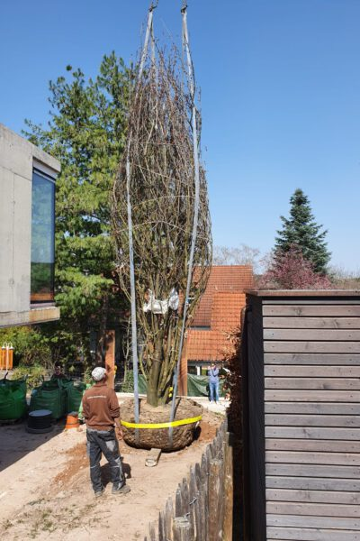 Baumpflanzung_1